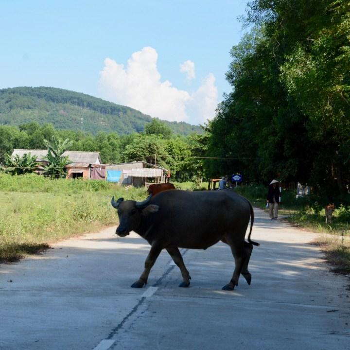 vietnam with kids hue cow alarm