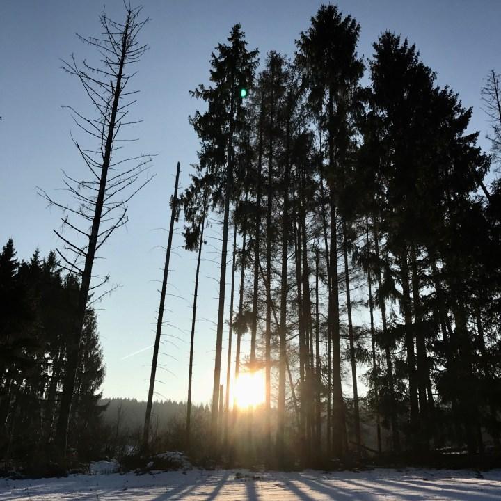 sledging in germany winter sun