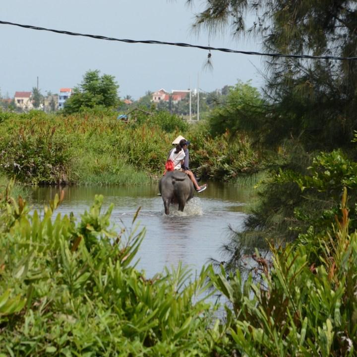 vietnam with kids an bang bike tour water buffalo