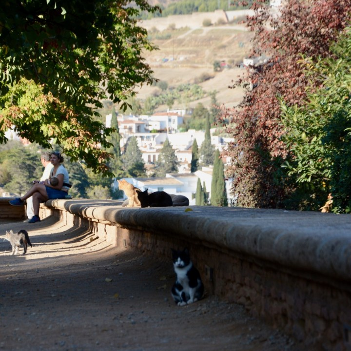 alhambra with kids carlos v palace cats