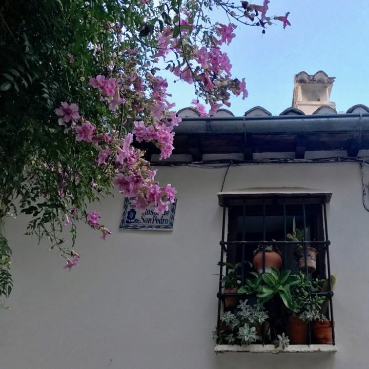 Granada spain with kids flower power