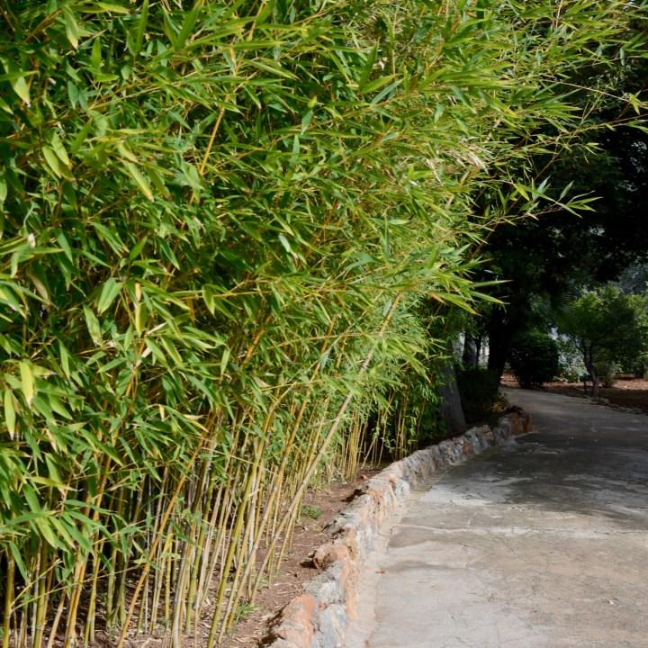 Mallorca with kids gardens alfabia bamboo