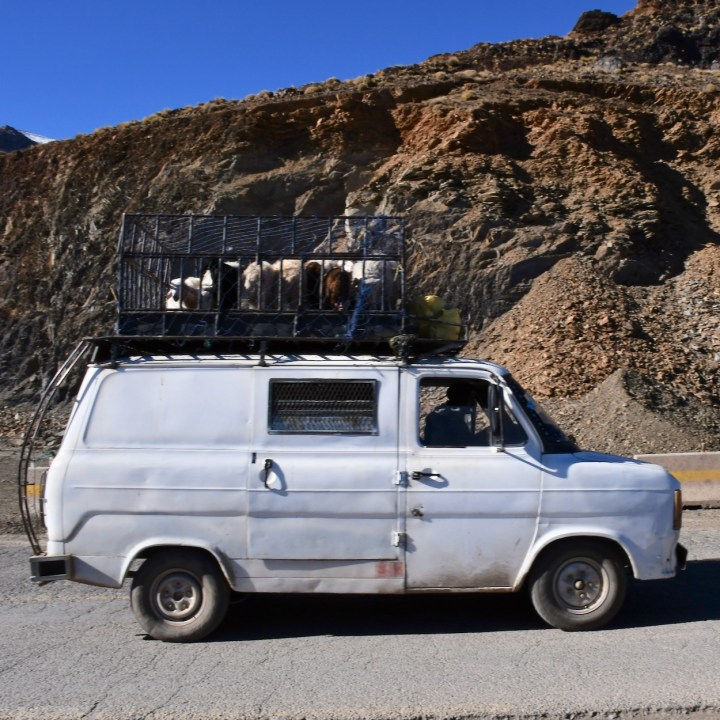 Morocco with kids atlas mountains sheep transport