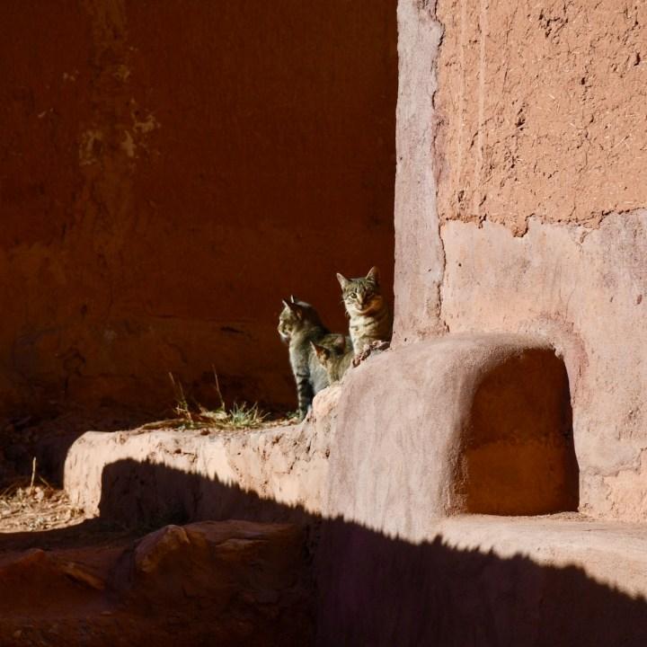 Morocco with kids telouet tigmi n'oufella cats