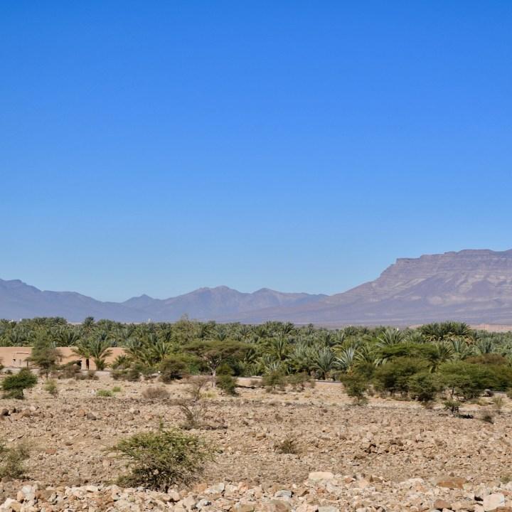 Morocco with kids drive M'Hamaid palm oasis