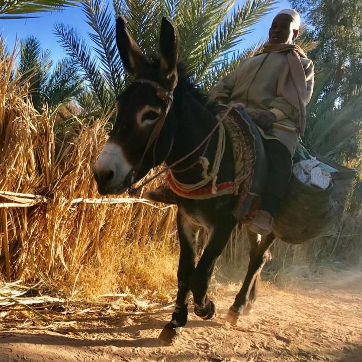 Agdz Morocco with kids Lodge Hara Oasis donkey rider