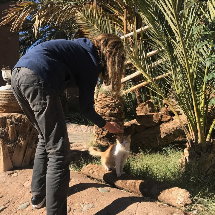 Agdz Morocco with kids Lodge Hara Oasis cat lover