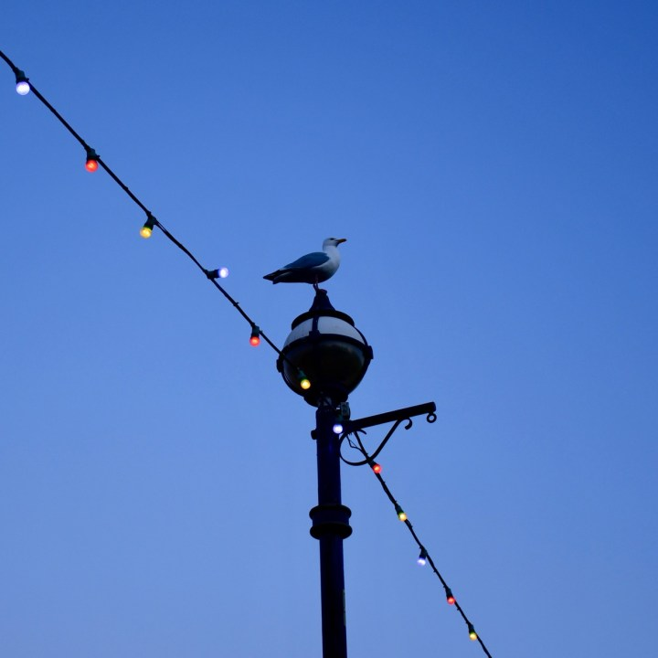 Broadstairs with kids seagull