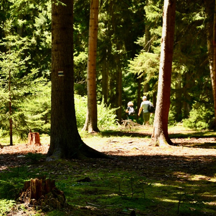 Borjomi with kids adventure trail