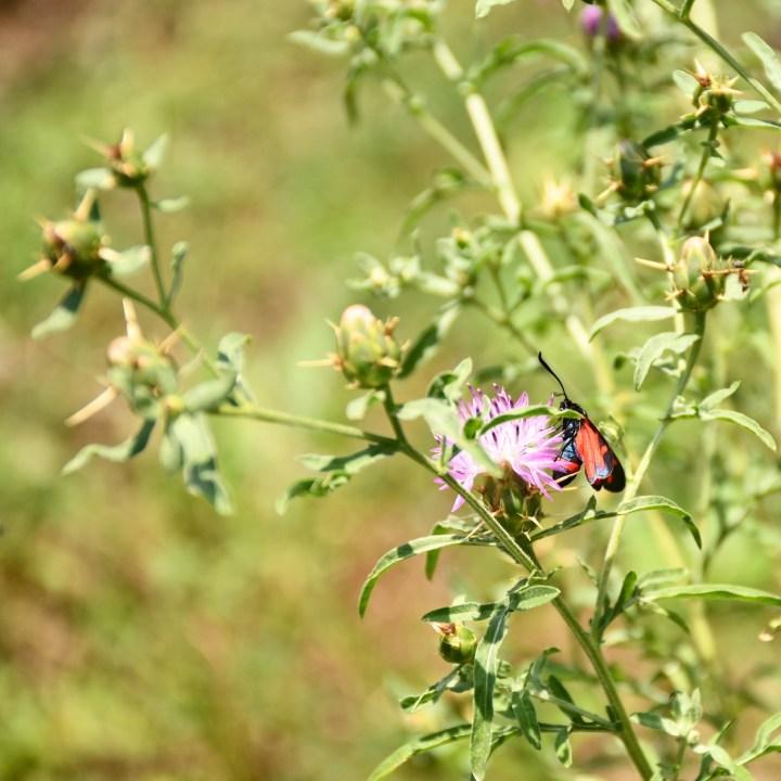 Borjomi with kids adventure trail butterfly