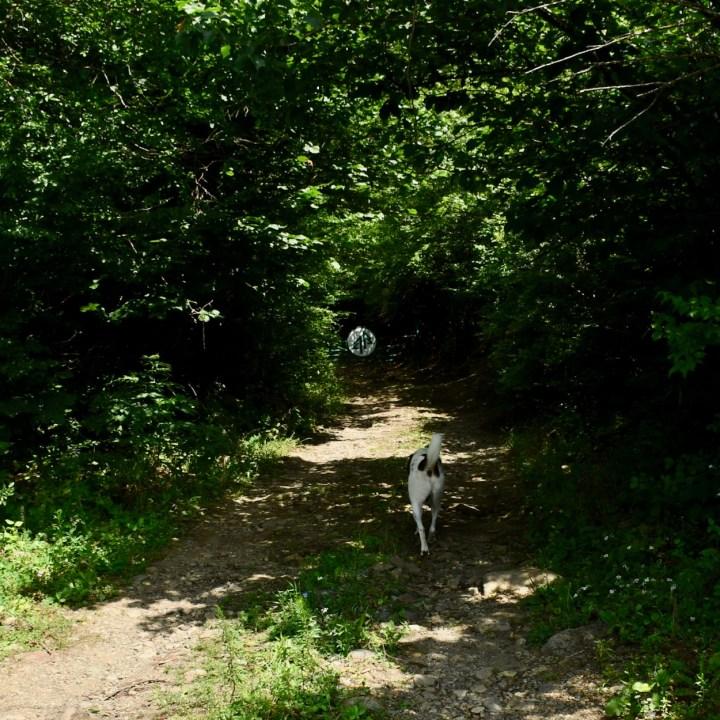 Askuri Georgia snowshoe hiking trail stray dog