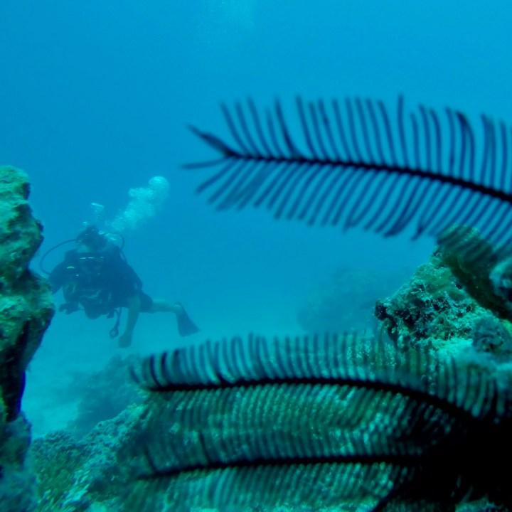 Padi dive course Maldives