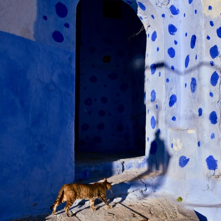 Chefchaouen Morocco cat stroll