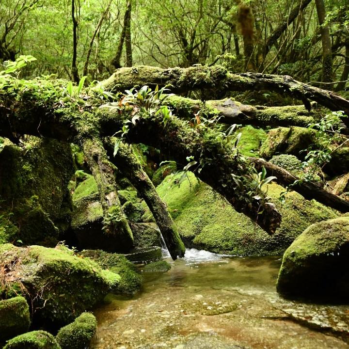 Shiratani Unsuikyo trail