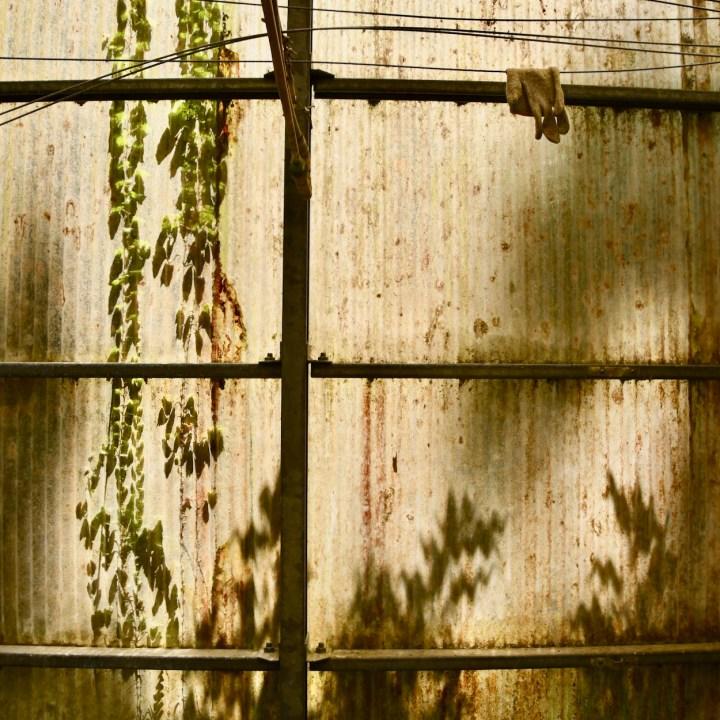 Yakushima Botanical Garden glasshouse