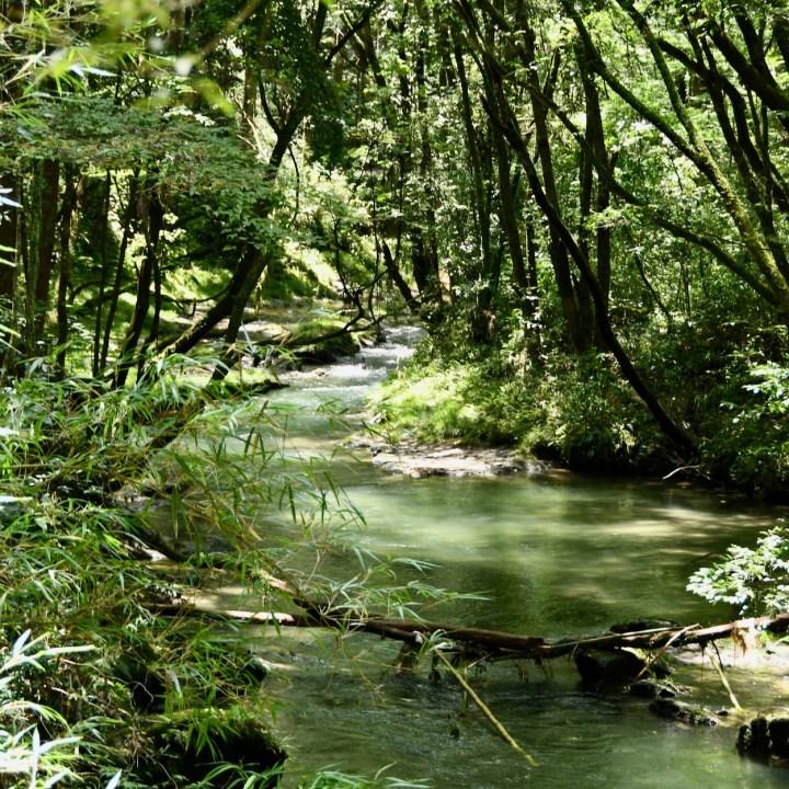 Kirishima Onsen Amori River walk
