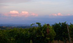 Wine and gorgeous views made this an amazing week with wonderful friends!