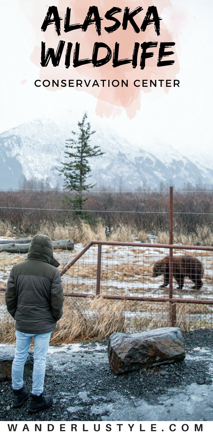 Alaska Wildlife Conservation Center - Alaska Things to do, Alaska wildlife, Anchorage Alaska | Wanderlustyle.com