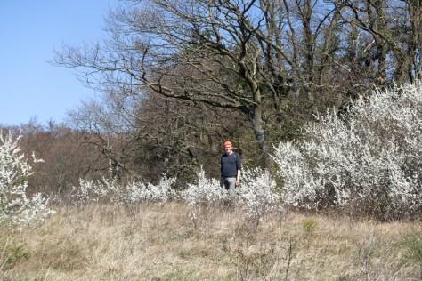 Frühling im Kaiserstuhl