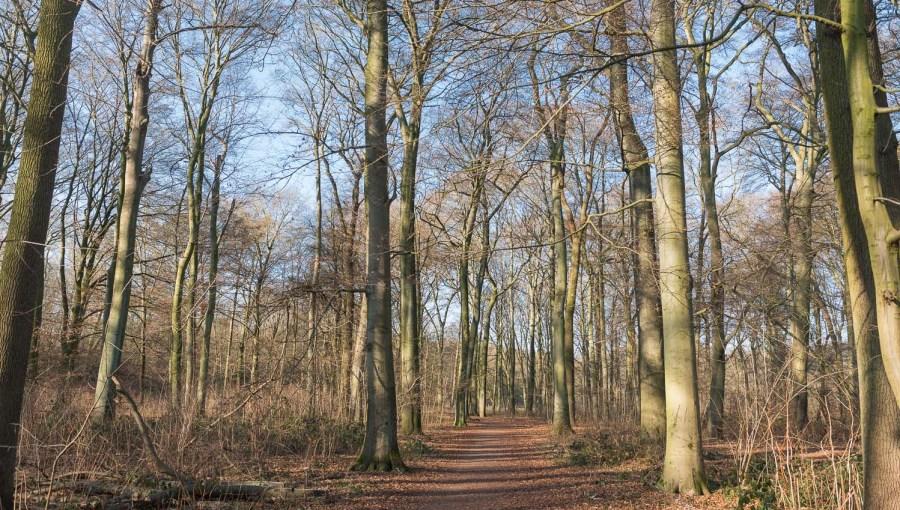Waldweg bei Opladen