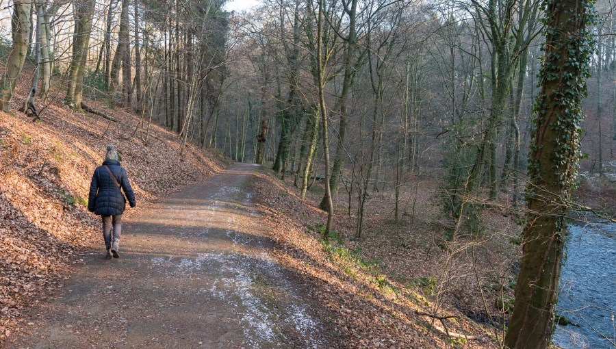 Waldweg im Murbachtal