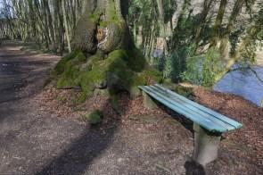 Bank mit Baum