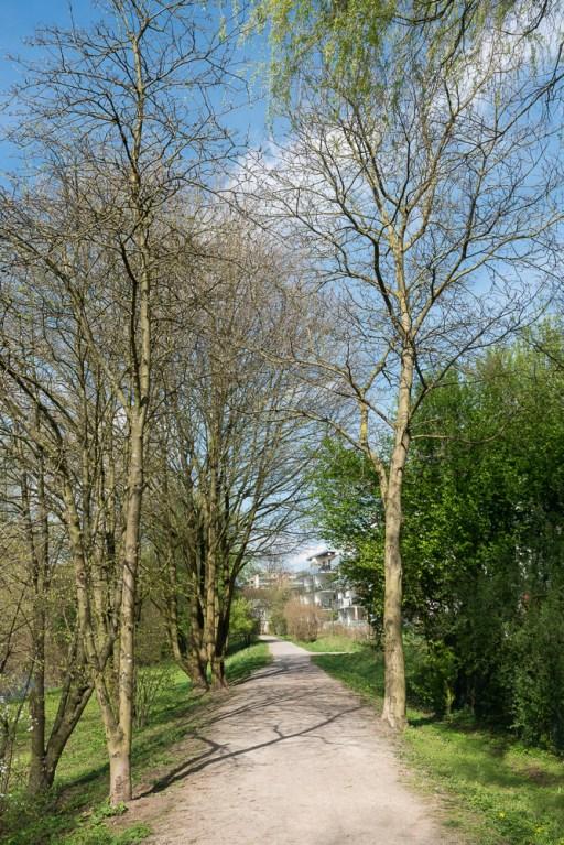 Frühling am Wupperbegleitweg