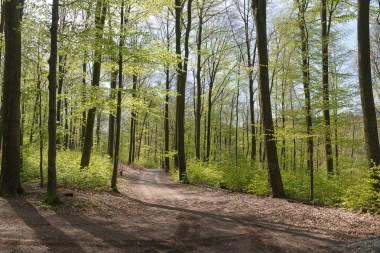 Weg zur Sengbachtalsperre