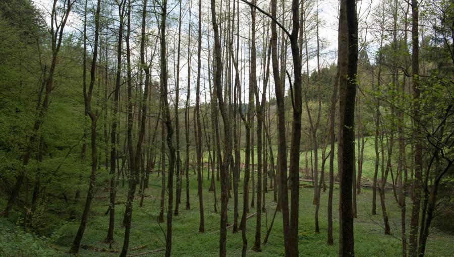 Wald im Eifgental