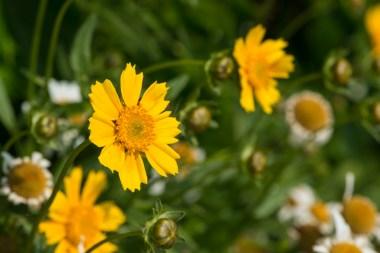 Blumen in Bergerhof