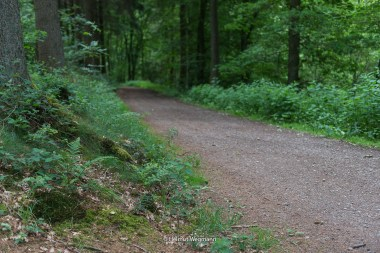 Waldweg im Herbringhauser Bachtal