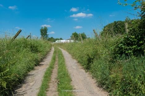 Feldweg hinter Glöbusch