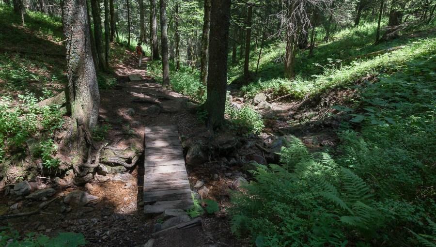 Abstieg im Wald