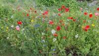 Blumenwiese am Splash-Bad
