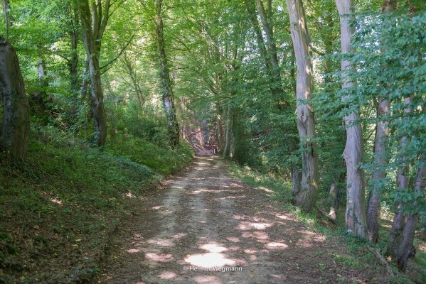 Waldweg hinter Gammersbacher Mühle