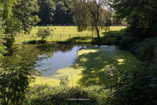 Teich in Flockertsholz