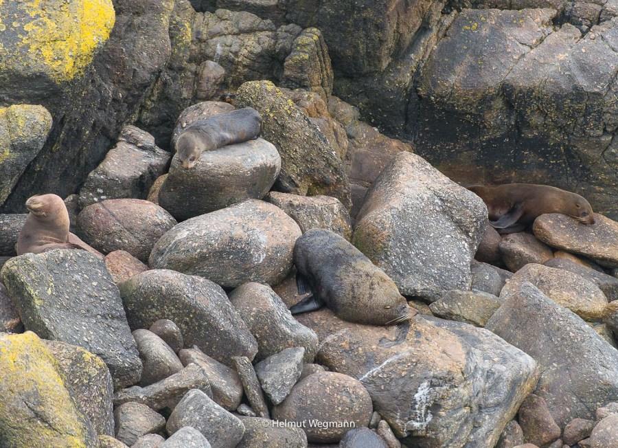 Robben an der Westküste