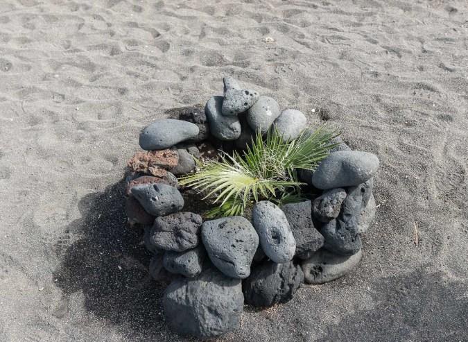 Windschutz für kleine Palme