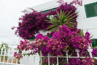 Blumenpracht in Playa Honda