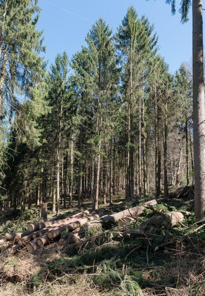 Waldbruch