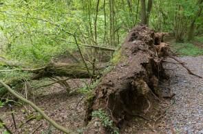 Überall umgekippte Bäume