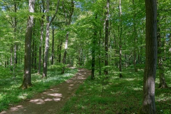 Lichter Frühlingswald