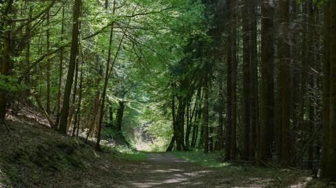 Waldweg im Nitzbachtal