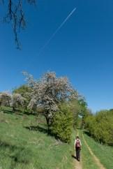 Obstbäume unterwegs