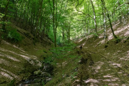 Nebenbach zum Nettebach