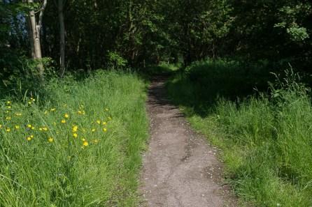 Weg im Naturschutzgebiet