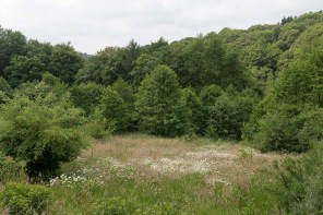 Margeritenwiese