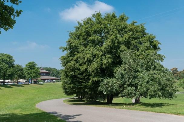 Im Rheinaue Park