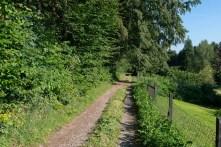 Weg am Waldrand