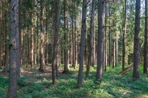 Der Wald sieht genau so aus wie anderswo